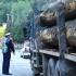 Mii de metri cubi de material lemnos, confiscați de polițiști