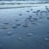Invazie de meduze pe litoral