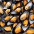 Midii testate pozitiv la opioide. Somonul și alți pești ar putea fi afectați