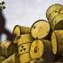 Ne paşte un nou infringement pe tema combustibilului uzat şi deşeurilor radioactive