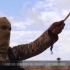 Forțele irakiene au intrat în orașul Tal Afar, eliberând două cartiere de sub controlul SI