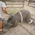 ONG-urile cer interzicerea animalelor în circuri! Sunteţi de acord?