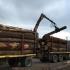 Comisia de Mediu din Cameră: Amenzi majorate de 10 ori pentru operaţiuni ilicite cu lemn