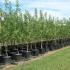 42 milioane lei pentru a planta peste 32 milioane de puieți, în primăvară