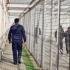 CCR: Criteriile de evaluare a activităţii angajaţilor din penitenciare trebuie stabilite prin lege organică, nu prin hotărâri de guvern