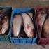 Peşte fără documente legale, confiscat de poliţiştii de frontieră