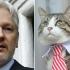Ce s-a întâmplat cu... pisica lui Julian Assange, după arestarea acestuia