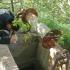 Intervenție pentru salvarea unor pisici căzute într-o fântână!
