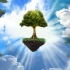 Vrei să plantezi păduri? Ia bani de la APIA! Vezi detalii