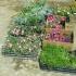 Tone de plante ornamentale fără documente legale, confiscate