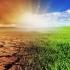 Plantele au nevoie de mai puțină apă, pe măsură ce planeta se încălzește