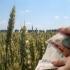 Fermierii vor primi vineri primele subvenții pentru sectorul vegetal