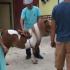 """""""Plimbă-ponei"""", amendat de i-au sărit capacele"""