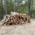 Polițiștii constănțeni, la vânătoare de hoți de lemne