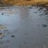 Poluare cu deşeuri menajere în Marea Neagră. Iată ce spun autorităţile