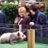 Primul pui de panda născut în Franţa a fost prezentat publicului