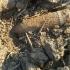 Pericol! Proiectil de artilerie descoperit pe câmp, în timpul unei lucrări agricole
