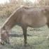 Proprietarul cailor găsiţi abandonaţi, a fost amendat cu 3.000 de lei