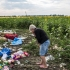 Racheta care a doborât zborul MH17 deasupra Ucrainei, ucigând 298 de persoane, era rusească!