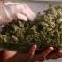 Traficanți constănțeni de droguri de risc, reținuți