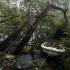 Alţi trei cetăţeni români, evacuați din zonele calamitate după uraganul Irma