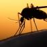 Australian testat pozitiv cu virusul Zika, la întoarcerea din vacanță