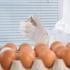 Scandal european! Ouăle contaminate, în 17 state membre UE!