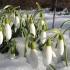Lapoviță și ninsoare până în martie