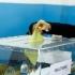 Turcii rezidenți în România, așteptați la vot în primul tur al alegerilor din Turcia