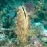 Un parazit din Marea Mediterană este pe cale să distrugă scoica care produce mătasea de mare