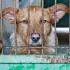 860 de animale au fost sterilizate în cea de-a doua campanie de sterilizare din Constanța