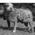 Ziua Internațională a Câinelui, cel mai iubit tovarăș al omului