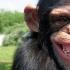 Studii amuzante! De ce a câștigat o româncă un premiu Ig Nobel