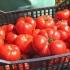 Programul de sprijin pentru tomate continuă și în 2018!