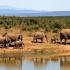 """Sute de elefanţi, descoperiţi morţi în Botswana. Cercetătorii nu ştiu încă de ce mor animalele, însă spun că este o situaţie """"fără precedent"""""""