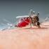Ţânţarii muşcă în funcţie de grupa de sânge