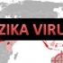 Țânțarul comun ar putea transmite virusul Zika