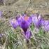 Tinereţe fără bătrânețe cu 12 plante din zona Dobrogei