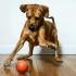 S-a inventat mingea inteligentă pentru câini și pisici