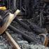 Cel puţin patru morţi în urma unui grav accident feroviar produs în Grecia