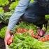 Cele mai mari suprafețe cultivate ecologic, în județul Tulcea
