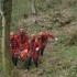 Turist rănit în Bucegi, coborât după o operațiune de opt ore