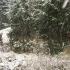 Iarna se întoarce! Valul de aer polar pătrunde în România
