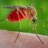 Pacienți care aveau virusul Zika, moți în Columbia