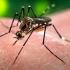 96 de tone de medicamente furnizate Venezuelei pentru combaterea Zika