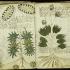 Manuscrisul Voynich va fi copiat pentru prima dată