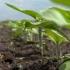 Vremea şi agricultura! Prognoză ANM