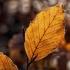 PROGNOZA METEO: Temperaturi de 16 grade Celsius la mijloc de decembrie