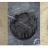 Zeci de mii de fosile, vechi de 518 milioane de ani, descoperite în China