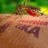 Peste 5.000 de femei gravide sunt infectate cu virusul Zika